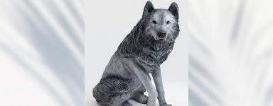 Chiens loup